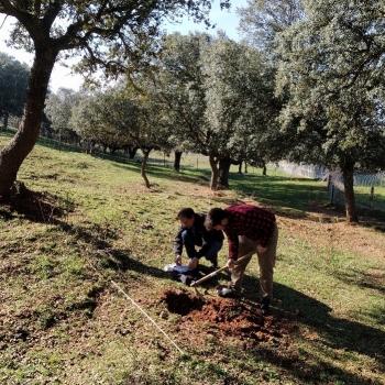 Mycorrhizas sampling process at Finca Muñovela