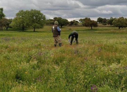 Visita de campo en Rollanejo, Salamanca