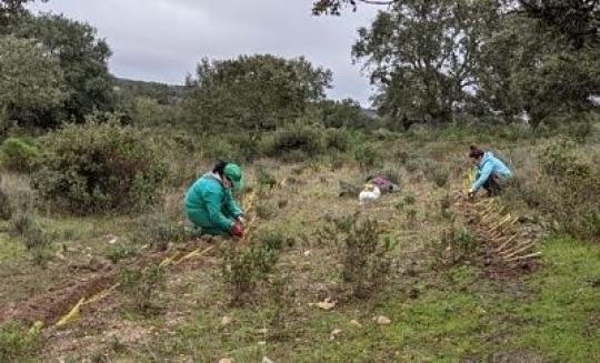 Nuevo plan de replicación en la Finca de El Baldío (Cáceres)