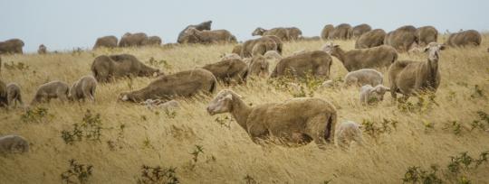 Beneficios económicos de la ganadería rotacional en la finca Mundos Nuevos
